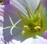 Wild Flowers in East TN