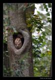 7643  tawny owl