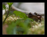6258  frog