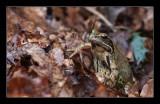 2568 frog