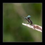 6764  beetle /  groene bladkever
