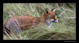 2481 fox