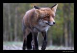 2213 fox