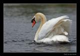 6709 swan