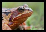 3643 frog
