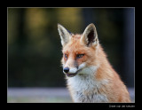 4054 fox