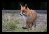 4082 fox
