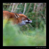 2892 fox
