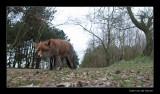 5501 fox