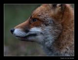 5214 fox