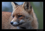 4894 fox