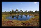 0853 Estonia, nat. park Laheema