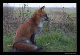 7736 fox