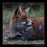 5235 fox