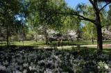 Spring in Savannah