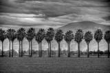 1/28/09- Palms