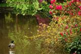 Descanso Gardens, California