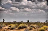 Desert Joshua Trees with Sky