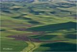 Palouse wheat fields