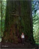 Boy Scout Tree Redwood and my wife Myriam.