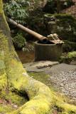 Small temizuya and moss-covered tree