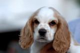 Puppy Marlee,