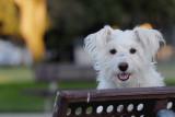 Dog-Phileo
