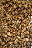 Bees! Bees! close look.