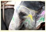 Is this Elephant happy?