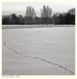 Tracks of a Hare - Sporen van een Haas