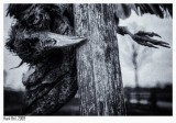 The Dead Crow