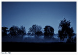 Fog in the Middle of the Night