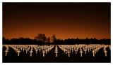 American War Cemetery - II