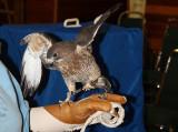 Ambassador Birds