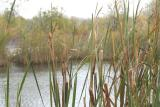 Assiniboine Forest Pond