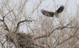 Eagle Landing 1.jpg