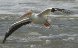 Pelican flight.jpg