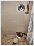 Mz. Fancy Katt taking a shower.