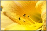 w-20090713-Flowers_8.jpg
