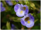 w-20090713-Flowers_23.jpg