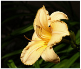 w-20090713-Flowers_42.jpg