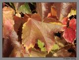Fall Fell.jpg