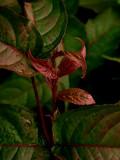 Red Leaf 09-29-07 marion.jpg