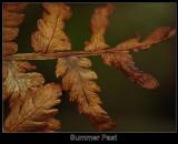 Summer past 09-29-07 marion.jpg