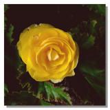 Flower 12.jpg