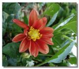 Flower 13.jpg