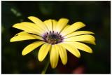 w-Flowers_12.jpg