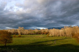 Neighbor's meadow