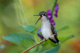 2010 Hummingbirds