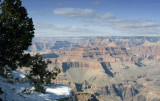Grand Canyon Tree and Snow